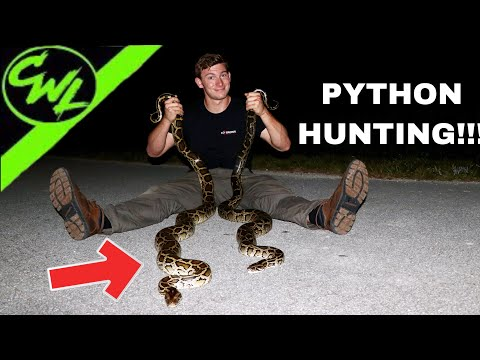 HUNTING FOR PYTHONS IN FLORIDA!!!