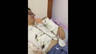 Cat Series: When a cat wants to sleep with me