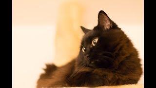 しゃべるねこと会話して過ごす夜更け Late night chat with Theo the cat.
