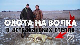 Охота на волка в астраханских степях