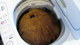 カピバラさん洗濯