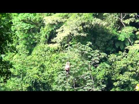 Vacation Packages to Costa Rica| Costa Rica Adventure Vacation Packages | AAA Tours