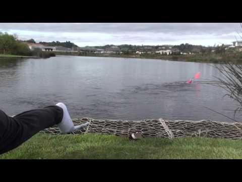 Dangerous Seahorse Testing