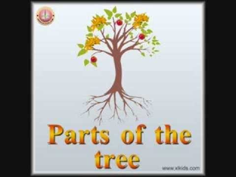Parts Of The Tree YouTube