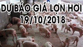 Dự báo giá lợn hơi 19/10/2018 | Giá lợn hơi 18/10/2018