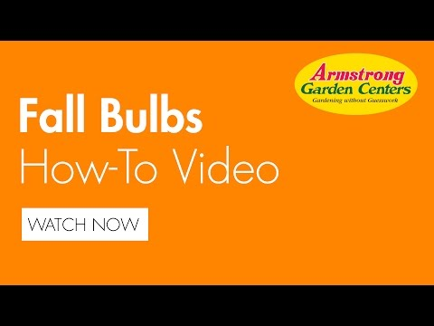 How to plant Fall Bulbs - Armstrong Garden Centers