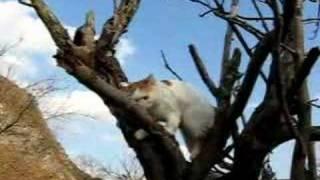 かご猫28