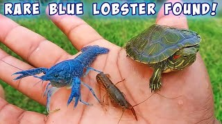 Found RARE BLUE LOBSTER for Aquarium!