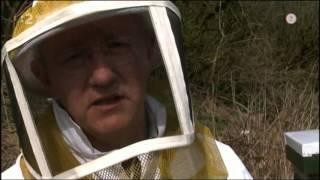 Miznutie včiel