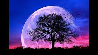 432Hz Healing Sleep Music ➤ Fall Asleep Fast and Easy | Healing Sleep Patterns | Relax & Feel Safe