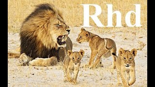 The Lion's  pride Share ,   (part 2)Nature 2018 Hd  Documentary (part 2)