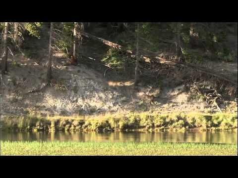 Yellowstone   Battle for Life winter summer  720p HD
