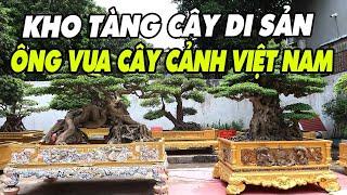 Mãn nhãn vườn cây Di Sản của ông vua cây cảnh Việt Nam