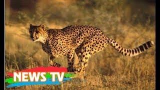 Top 10 loài động vật tốc độ nhanh nhất thế giới