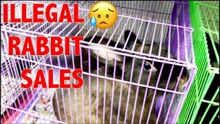 RESCUING BABY BUNNIES BEING ILLEGALLY SOLD 😭