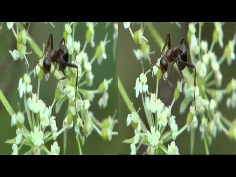 3D Ants on Flower