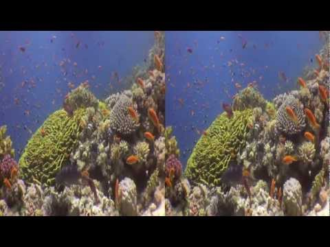 Underwater Stereoscopic 3D Demo (Red Sea)