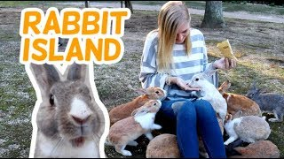 Japan's Rabbit Island Okunoshima with Thousands of Cute Bunnies and A Dark History