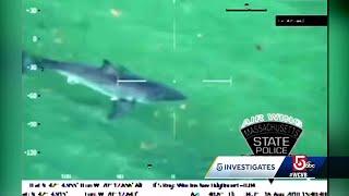 5 Investigates: How is Cape Cod preparing for summer shark season?