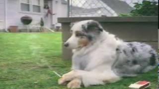Endlich! Rauchverbot für Hundehütten eingeführt!