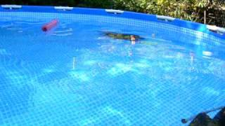 Dobby the capybara swims in his new pool