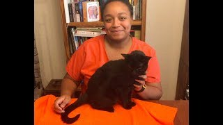 Ask.Vet u2013 Massaging Your Cat For Good Health