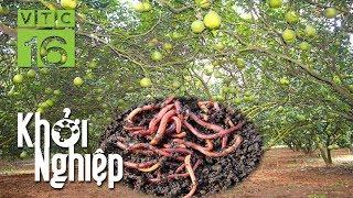 """Chuyên gia """"mê tít"""" cách nuôi giun trồng bưởi của nông hộ I VTC16"""