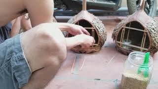 vài nét cơ bản về nuôi chim cu gáy bổi - mộc, facebook : Chim Cảnh Đất Việt - 0908070555
