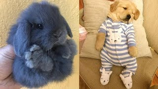 Cute baby animals Videos Compilation cutest moment of the animals - Soo Cute! #94