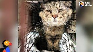 Feral Senior Cat Becomes A Total Mama's Boy - MR. BELVEDERE | The Dodo