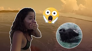 I WAS SO SCARED!!! (They attacked me)