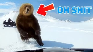 Top 5 Scariest Bear Encounters Caught on GoPro Camera
