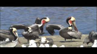 Birds Vertebrates   Biology   Nature