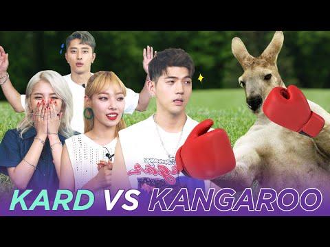 KARD vs KANGAROO? Who Would Win? ENG SUB • dingo kdrama