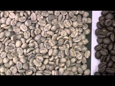Kenya AA Top Quality - Caffè Sandalj Excellence *