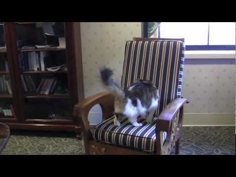 Oscar the cat, Dr. Dosa, his new book, and the hazards of meeting the press