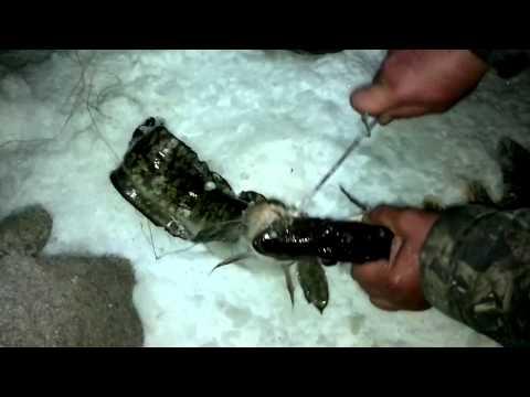 Щука и Налим двойная поклевка. Чудеса. Зимняя рыбалка.