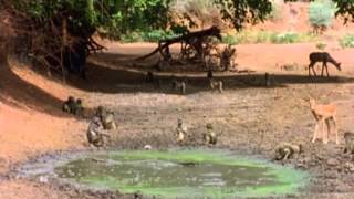 Last Feast of The Crocodiles - National Geographic