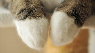 意外と器用な猫の前足