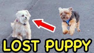 OTTER FOUND A LOST PUPPY!!