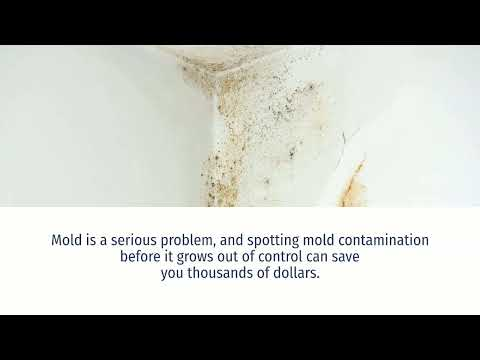 What do you do if your house is positive for mold? Mold Testing Rockville Maryland  301 717 1454