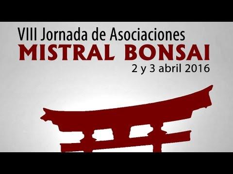 VIII Jornada de puertas abiertas y de asociaciones Mistral Bonsai