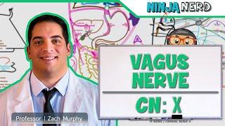 Neurology | Vagus Nerve | Cranial Nerve X