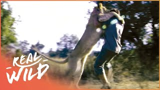 Attack By Predators Of The African Savanna! | Human Prey| Real Wild Documentary