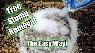 Possibly The Easiest Way To Remove A Tree Stump! Using Epsom Salt!! Part 1