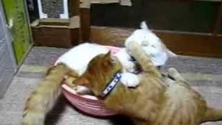 かご猫25