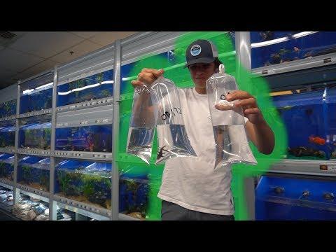 Sick AQUARIUM FISH 3!!!!