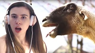 REACTING TO GOATS SCREAMING LIKE HUMANS!!!
