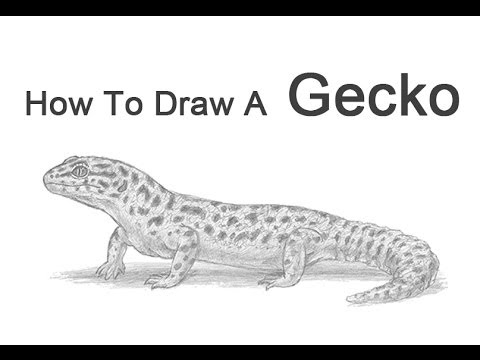 How To Draw A Leopard Gecko Youtube