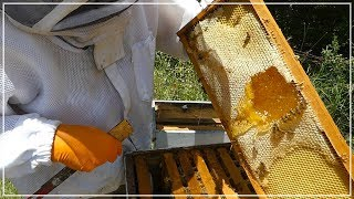 Beekeeper LOOKS FOR HONEY and finds THIS